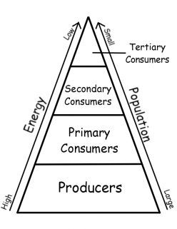 Ecology Trophic Transfer Of Energy In An Ecosystem Energy Pyramid Teaching Science Pyramid Lessons