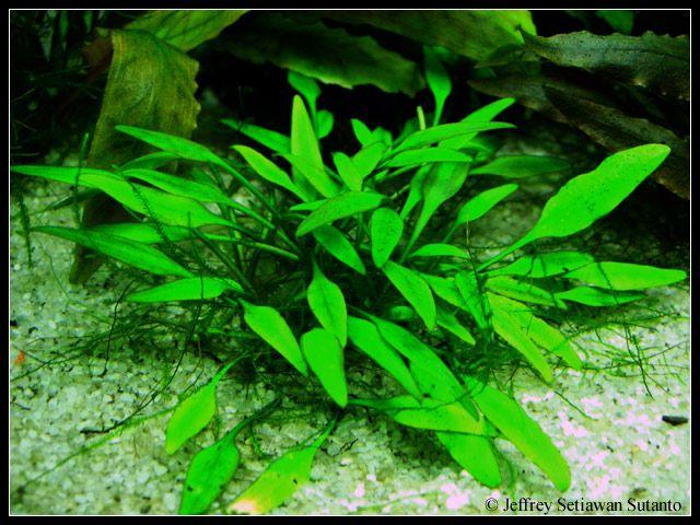Tình yêu cây cỏ ĐV2 - Page 92 Dac0e5ba3c4460035bd5846ac7fadb06