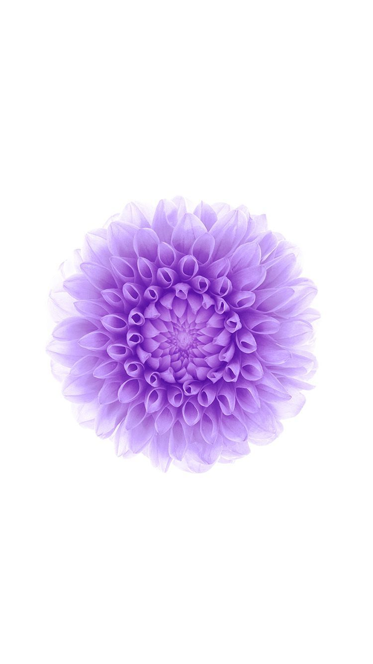 Iphone 6 Official Wallpapers Purple Flowers Hd Iphone 6 Wallpaper Iphone Wallpaper Ponsel Mobiles