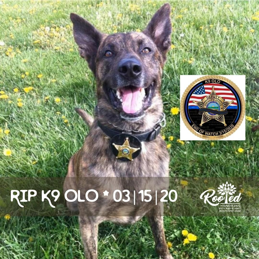 Pin On Rooted Pet Memorial Ideas