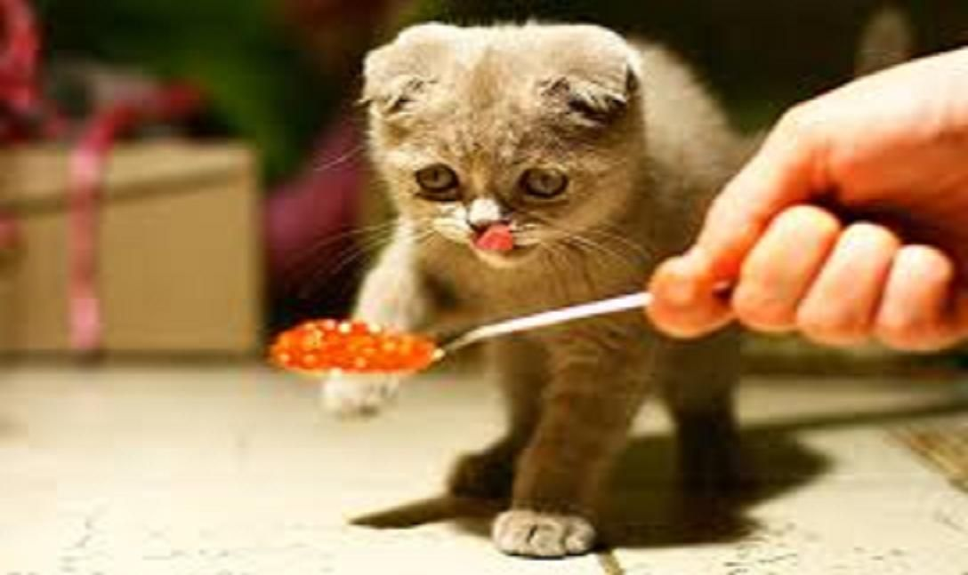 How Often And How Much Should I Feed My Cat Dog Grooming Foods Cats Can Eat Large Dog Crate