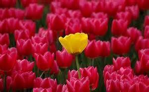 Resultados de búsqueda de Yahoo Yahoo resultados de búsqueda de imágenes - fotos de flores bonitas