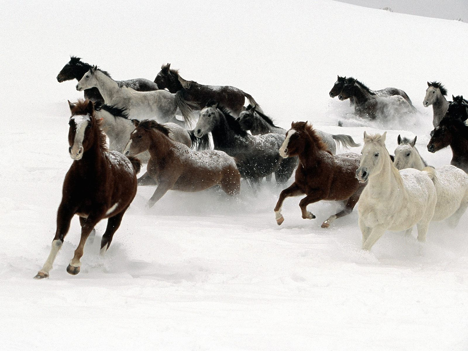 Top Wallpaper Horse Winter - dac391b5dcb491233b042cb61702300f  Graphic_394274.jpg