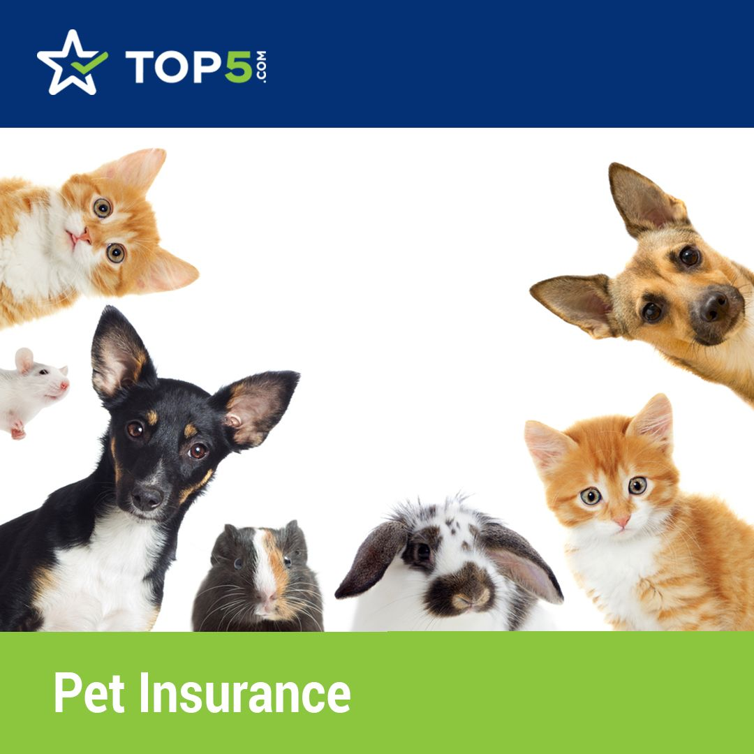 Pin On Top 5 Pet Insurance