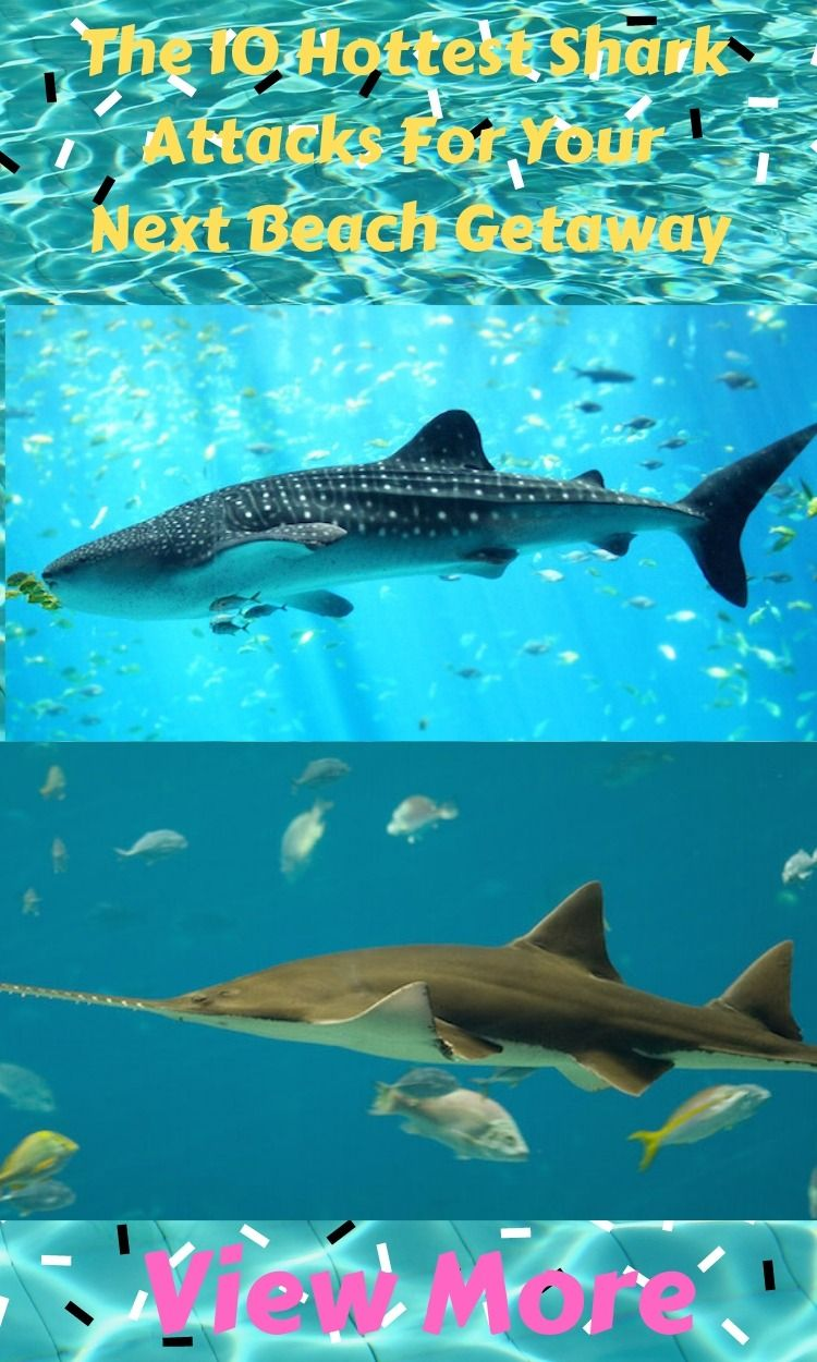 Planning to get attacked by a Bull Shark this summer? So