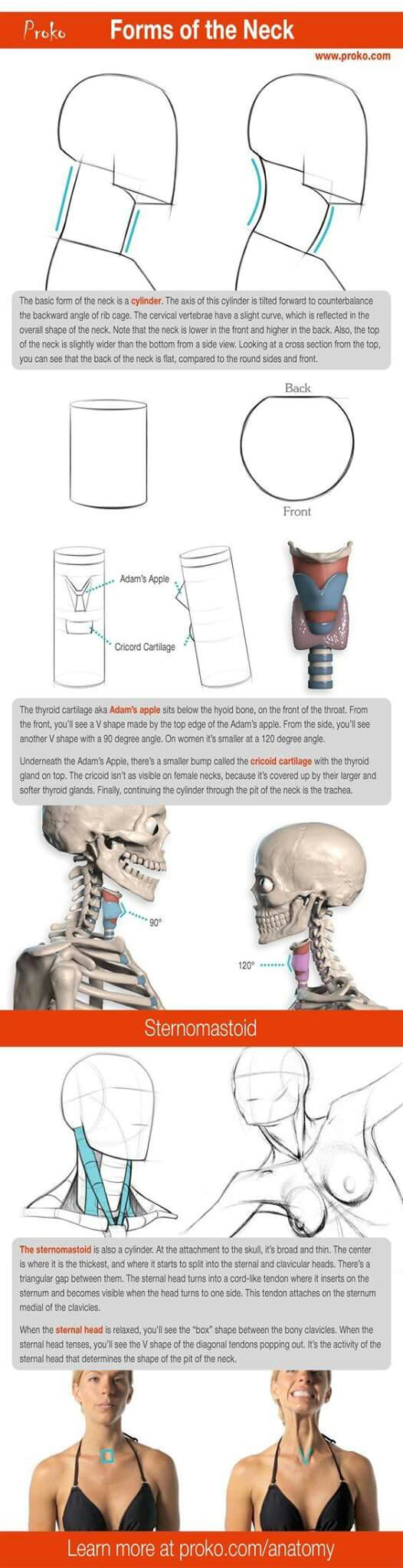 Pin de MAXI CARRION en TUTORIALES | Pinterest | Anatomía, Anatomía ...