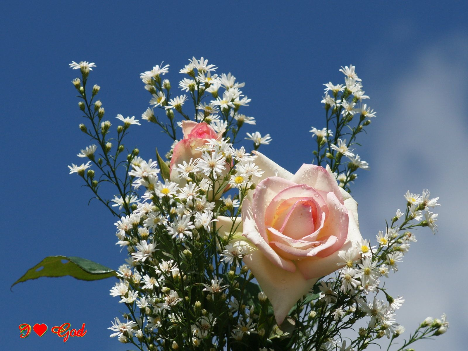 roses wallpaper..says i love God