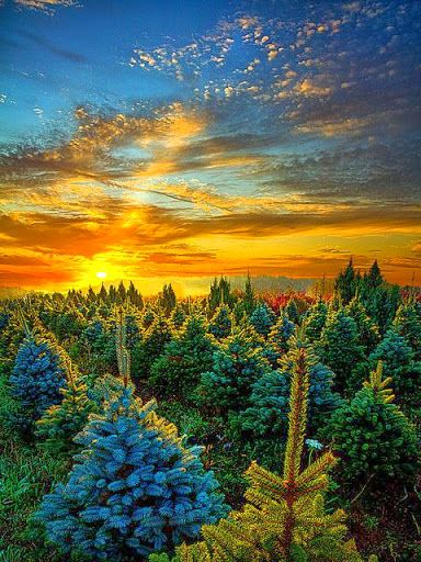 Christmas Tree Farm Wisconsin Google With Images Beautiful Nature Beautiful Sunrise Nature