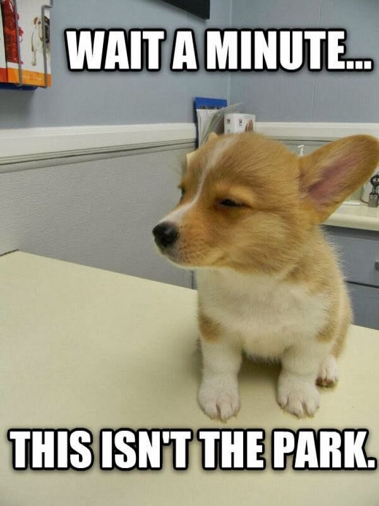 Funny Animal Captions Part  Pics Funny High Puppy Meme