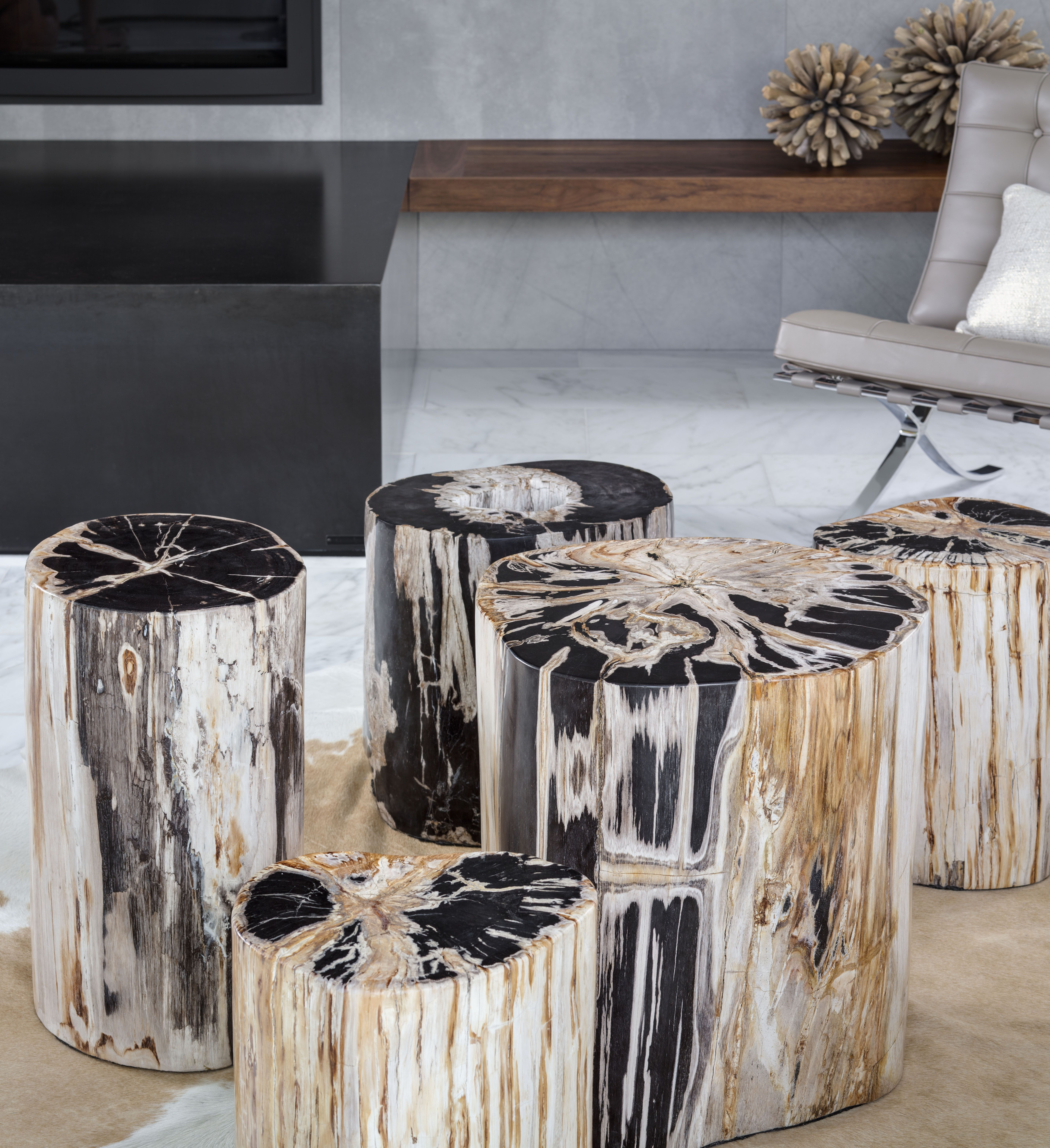 David Alan Collection Cluster of our petrified wood stumps used