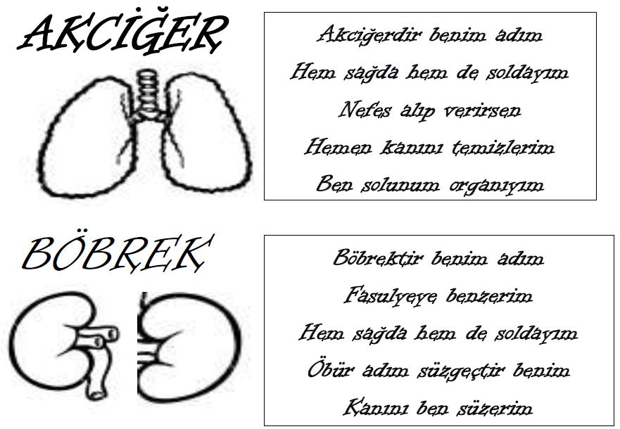 2 Sınıf Hayat Bilgisi Iç Organlarımız 2 Sınıf Hayat Bilgisi Iç