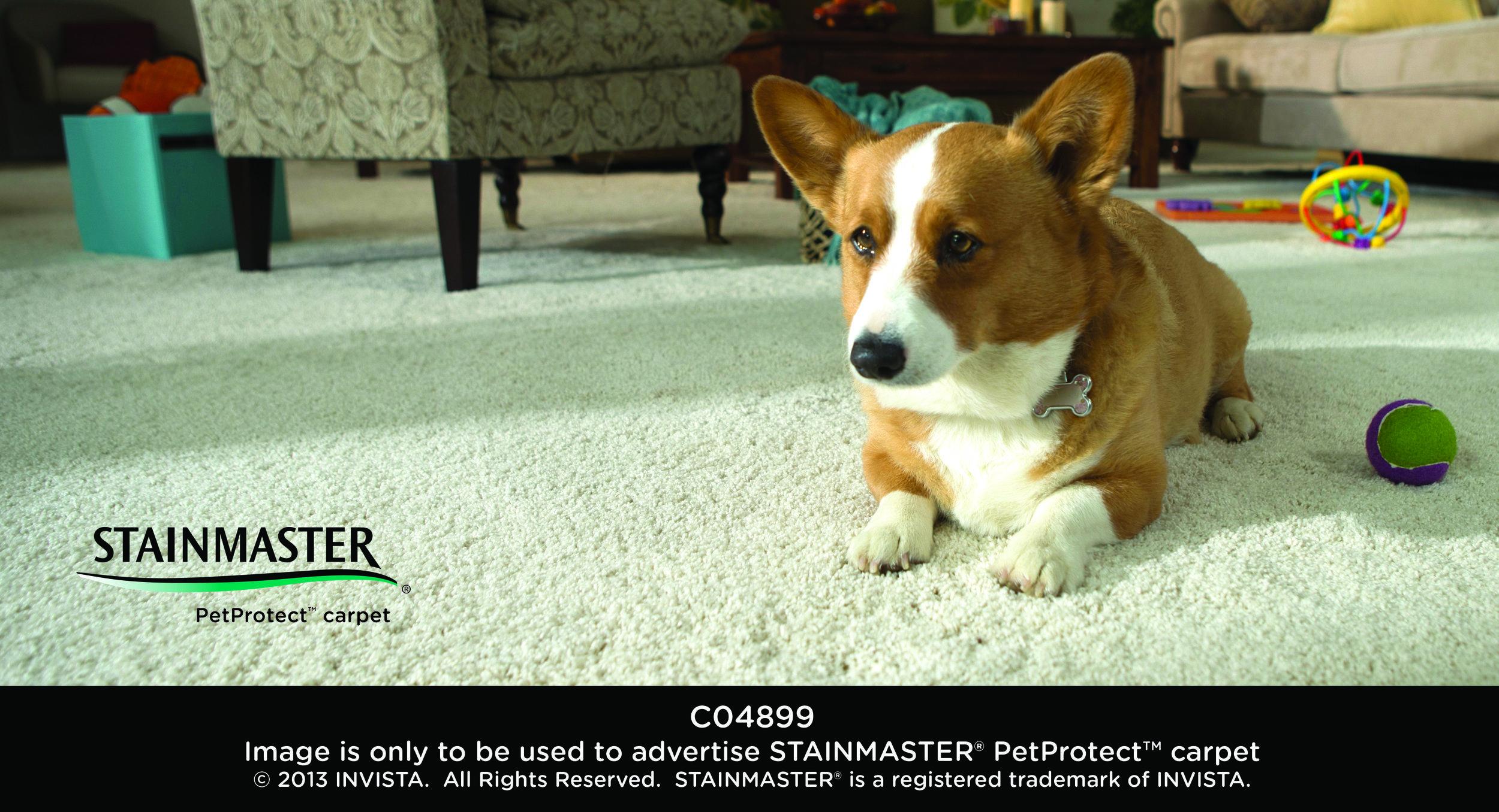 Does Your Home Need Pet Protect Carpet Pets Carpet Corgi