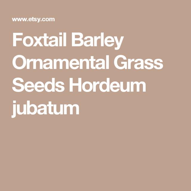 Foxtail Barley Ornamental Grass Seeds Hordeum jubatum