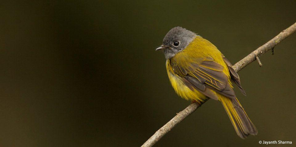http://toehold.in/phototours/images/nilgiri-birding1.jpg