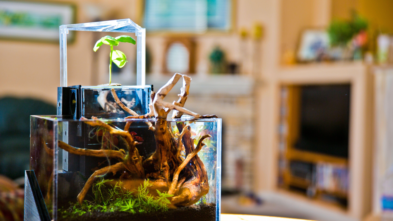 EcoQube DIY Aquaponic Gardening with Fish