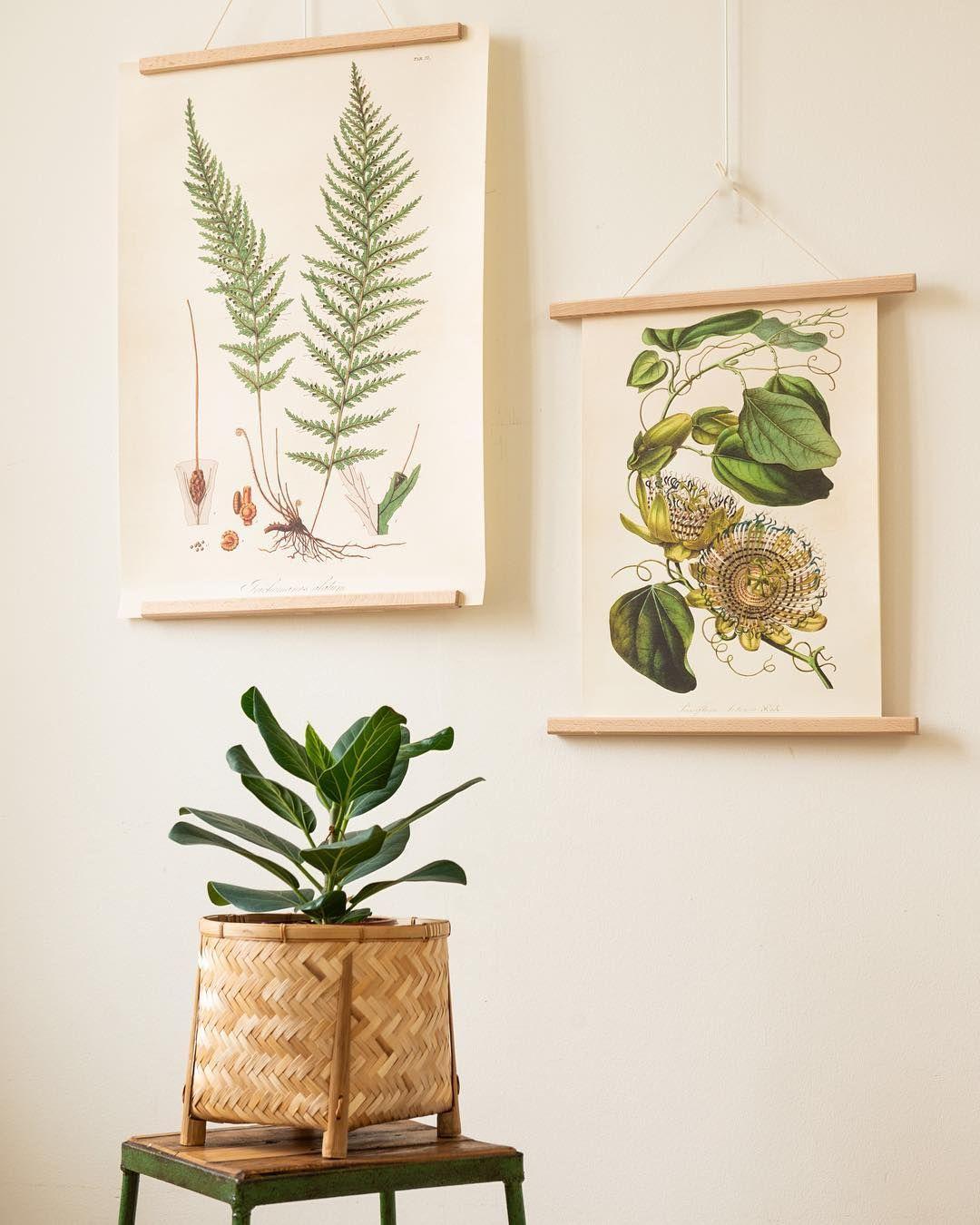 Met Deze Poster Met Botanische Print Fleur Je Je Huis Meteen Helemaal Op Leuk Als Wanddecoratie Voor Op Een Kinderkamer Je Eigen Painting Planter Pots Visual