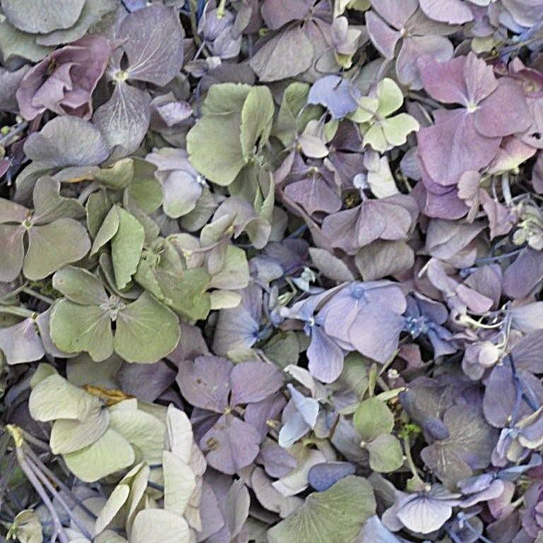 Order Whole Lavender Green Fd Hydrangea Petals Cups For Diy Weddings Events Fundraisers And Parties