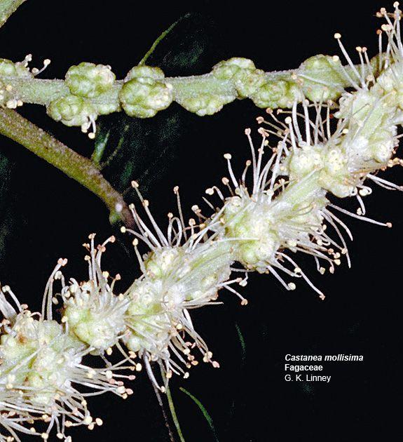 http://www.botany.hawaii.edu/faculty/carr/images/cas_mol_m.jpg