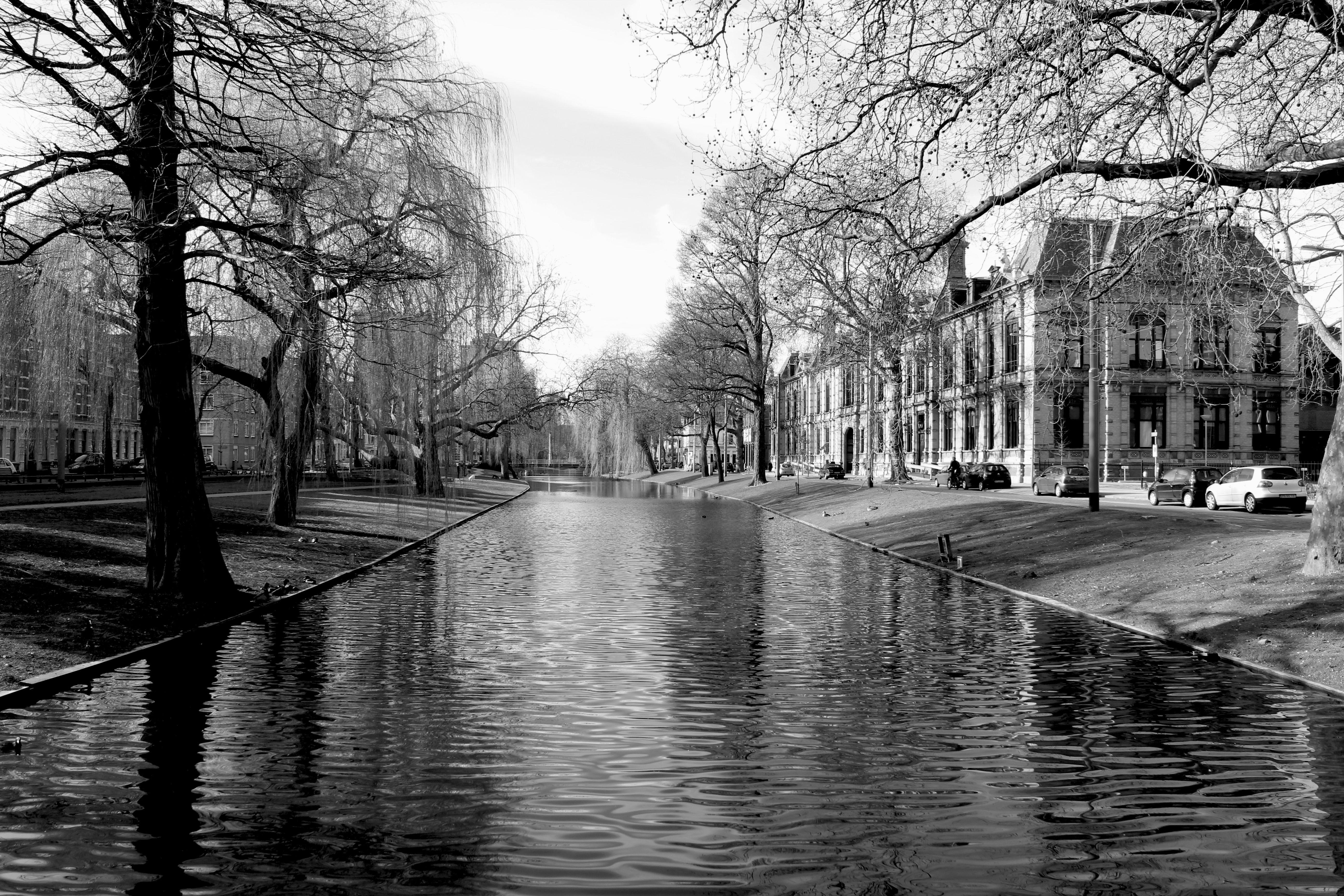 Noordsingel Rotterdam