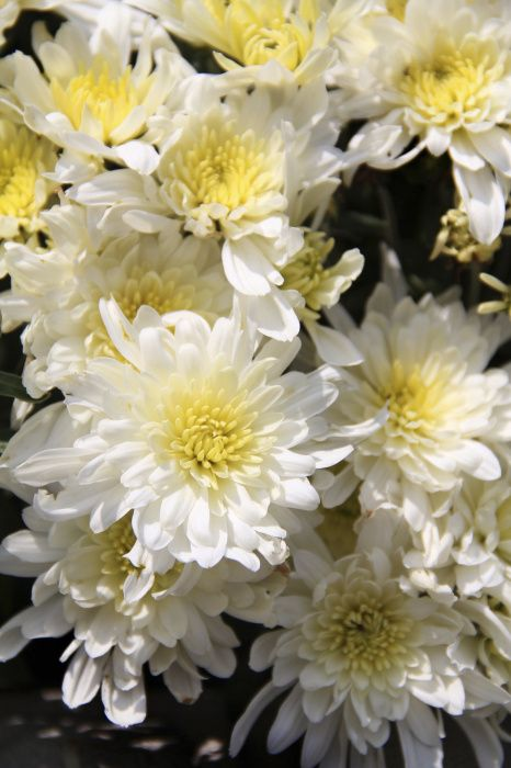 Pin Di Plant Of The Week
