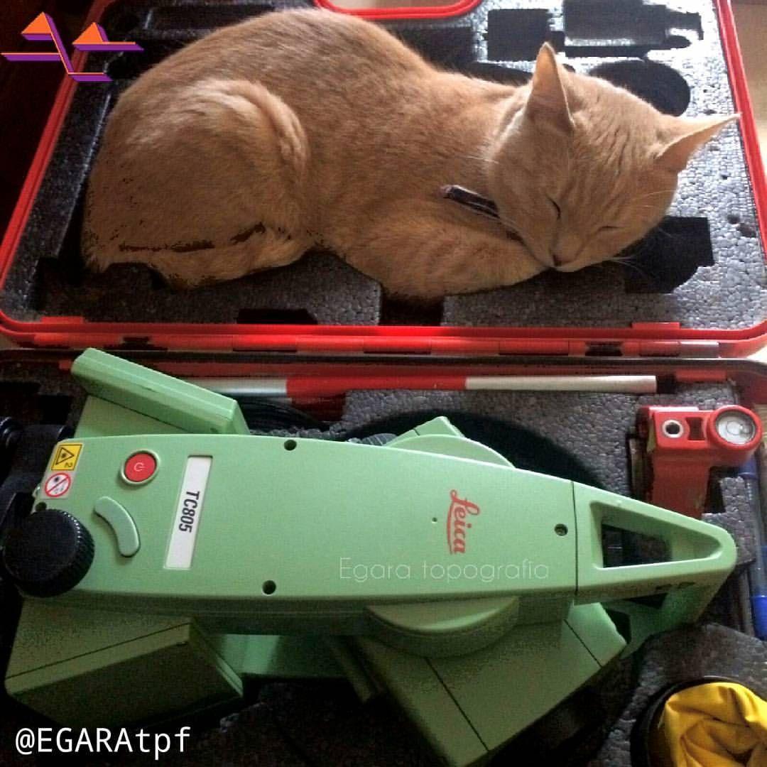 The cat is land surveyor 🐈 Geodesic humor for good weekend