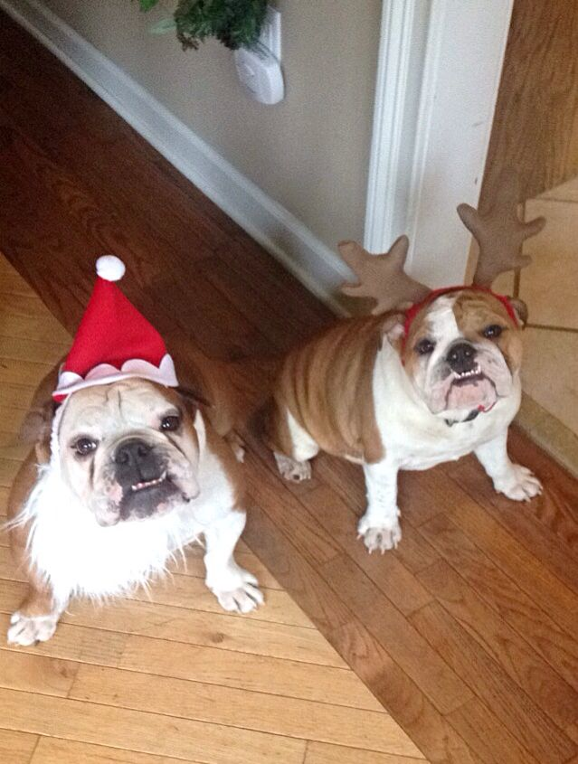 Bulldog best friends