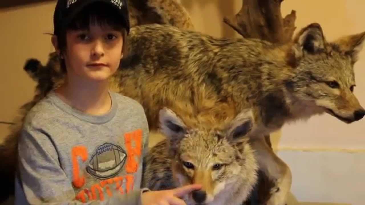 Coyote BobbleHead Bobble head, Coyote, Taxidermist