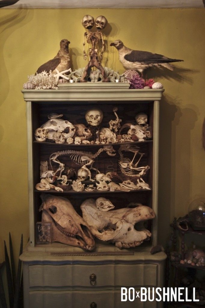 display of curios and oddities