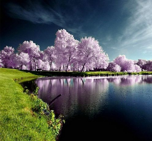 Most Beautiful Nature Photo | trees | Nature photos ...