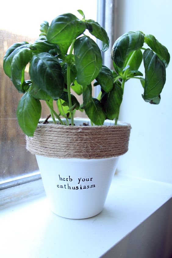 Herb Your Enthusiasm Funny Gardening Quotes Indoor Garden Plant Puns