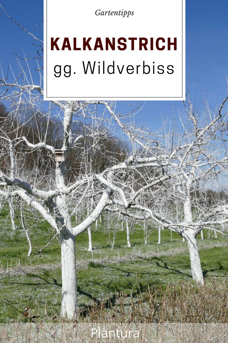 Kalkanstrich Bäume Selbst Herstellen