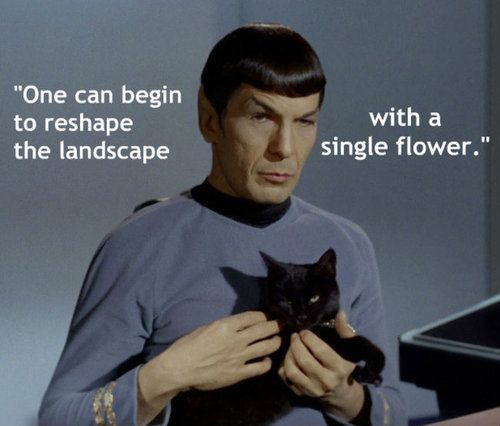 Spock Quotes Tumblr