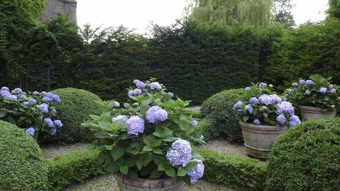 Hanham Court Gardens South Gloucestershire Hydrangea Landscaping Boxwood Garden Planting Hydrangeas