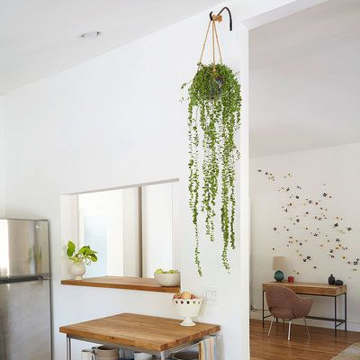 Designing With Potted Plants Minimalist Home Decor Hang Plants