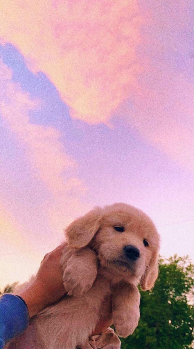 cute dog 🐶 #cutedog #cute #dog #wallpaper #wallpap