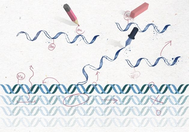 An epigenetics gold rush new controls for gene expression - new molecular blueprint definition