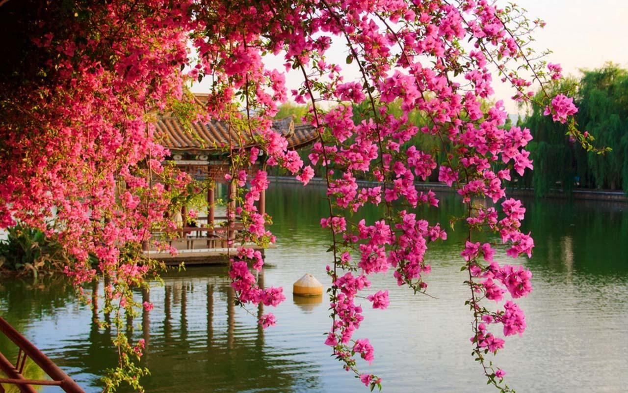 Flower Google Da Ara Beautiful Flowers Wallpapers Spring Flowers Wallpaper Japanese Flowers