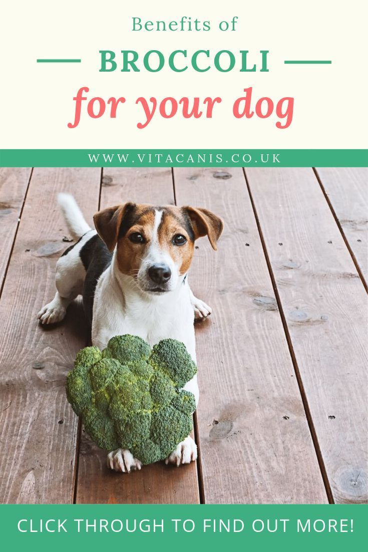 Benefits of broccoli for your dog vita canis 100