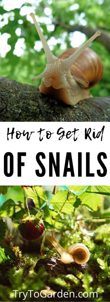 How To Get Rid Of Snails In Your Plants
