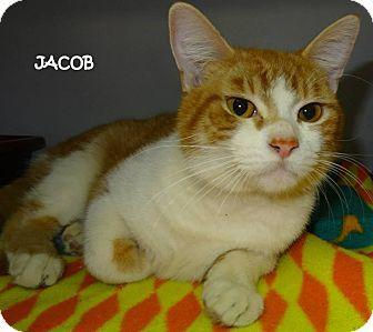 Lapeer, MI - Domestic Shorthair. Meet JACOB--SWEETEST FACE!, a cat for adoption. http://www.adoptapet.com/pet/12613046-lapeer-michigan-cat