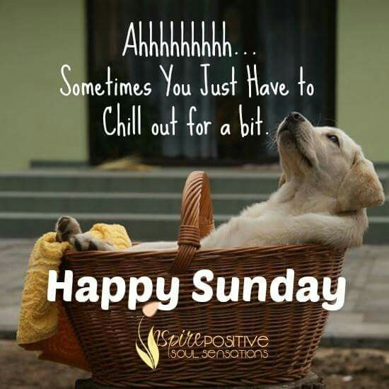 Image result for happy sunday pets