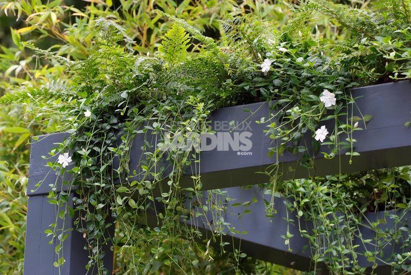 Douceur exotique : (tout) petit jardin à ambiance tropicale  LES ...
