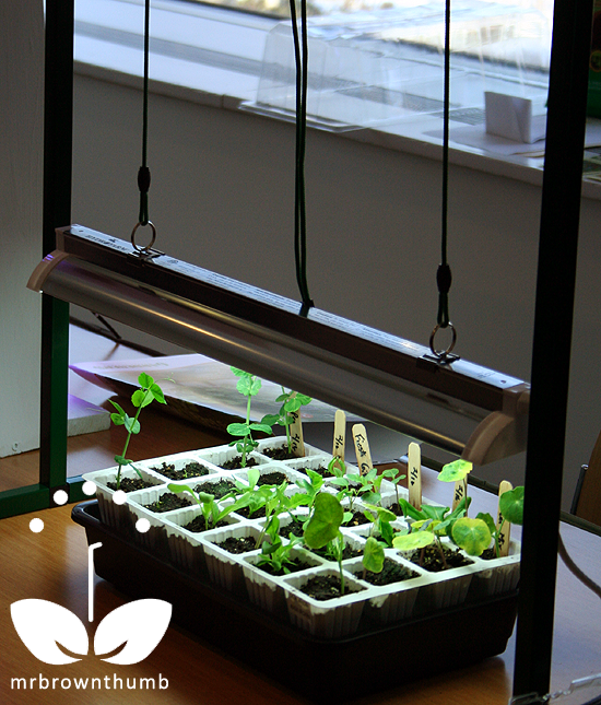 Tips For Indoor Gardening: Grow Lights For Indoor Seed Starting