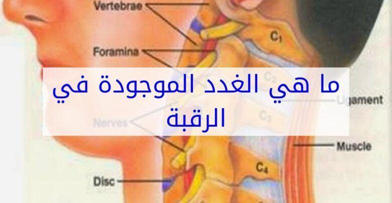 ما هي الغدد الموجودة في الرقبة ومشاكلها وعلاجها Muscle Vertebrae Nerve