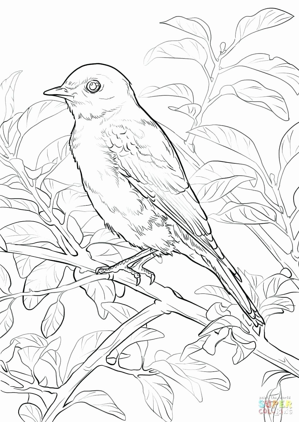 Bird Coloring Pages Coloring Pages Splendi Printable Bird Coloring