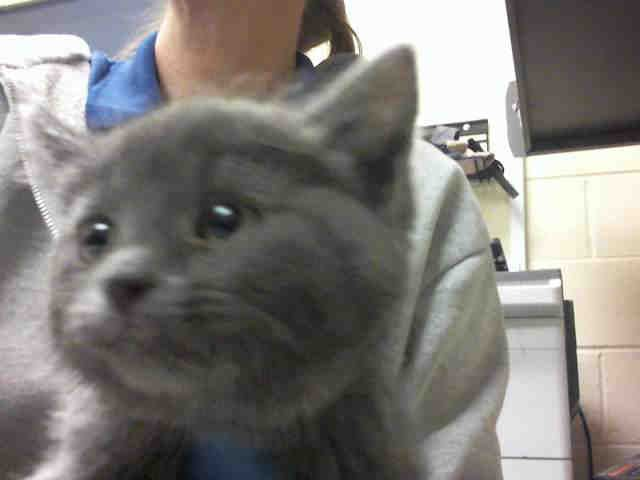 Kitten Found In Pittsburgh Pa Petharbor Com Animal Shelter Adopt A Pet Dogs Cats Puppies Kittens Humane Society With Images Animals Animal Shelter Humane Society
