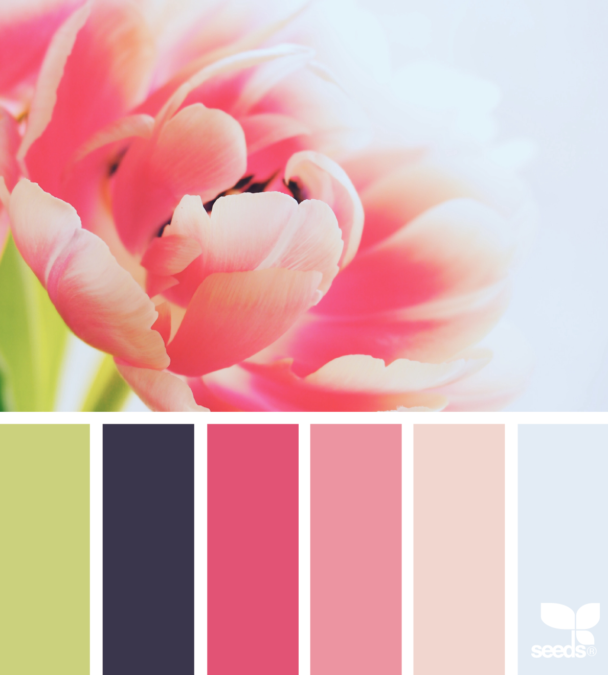 Flora Hues | Paletas de colores, Paletas y De colores