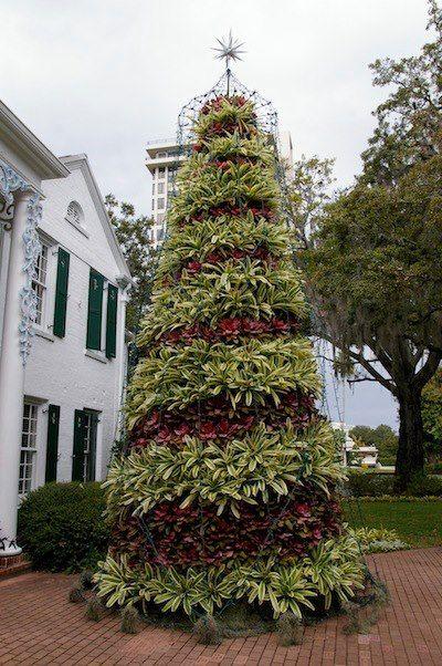 nice xmas tree | ideas | Pinterest | Xmas tree, Xmas and Air plants