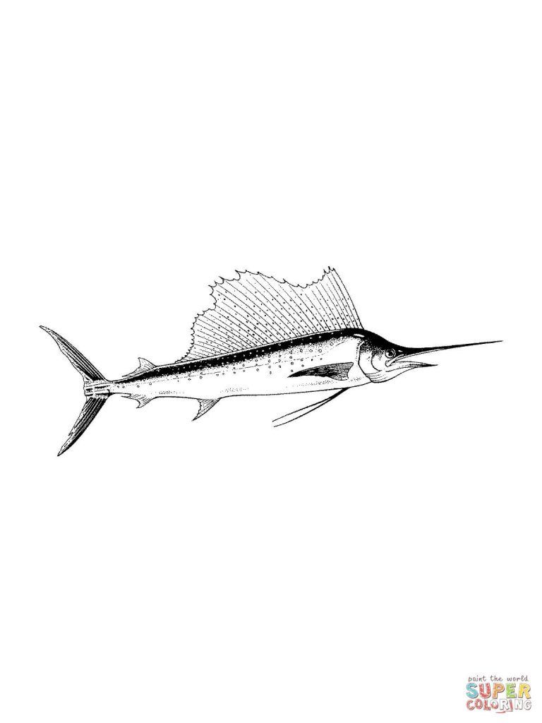 Free Printable Coloring Pages In Realistic Atlantic Blue Marlin Coloring Pages Free Download