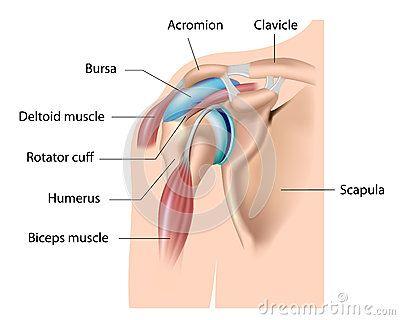 Shoulder Bursa Bursitis With Images Shoulder Impingement